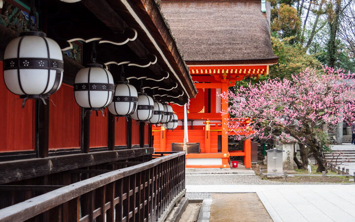 Kyoto Kitano Tenmangu temple lanterns with cherry blossoms