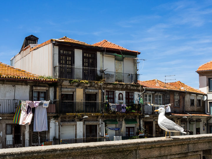 Seagull on rail in front of old Porto houses with laundry hanging