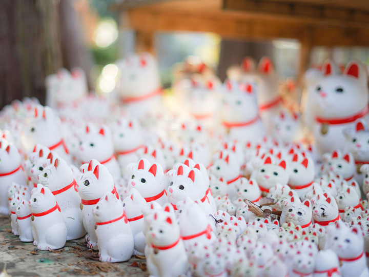 Collection of white Japanese lucky cat figures