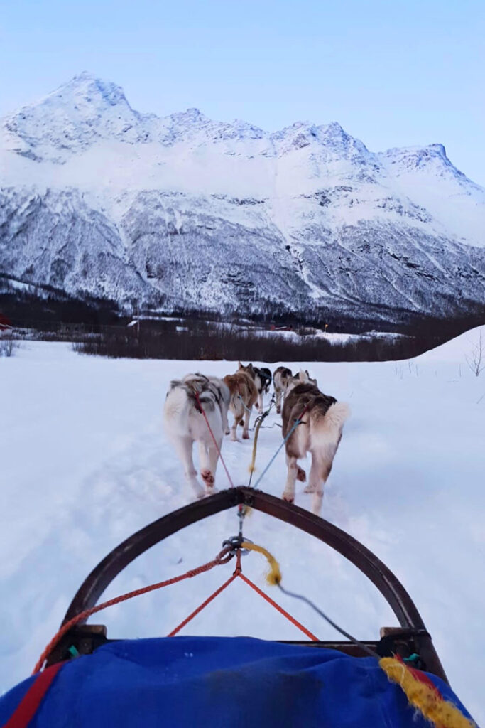 Blue sled being pulled behind dogs towards snowy mountain in Alta