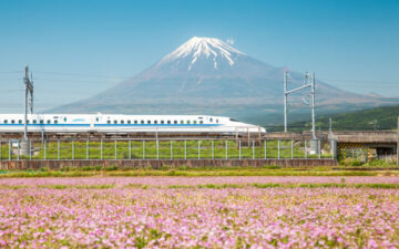 Mount Fuji and purple flower field viewed from Tokyo bullet train day trip