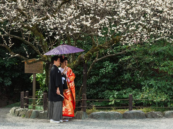 Married couple in traditional Japanese clothing standing under cherry blossom tree