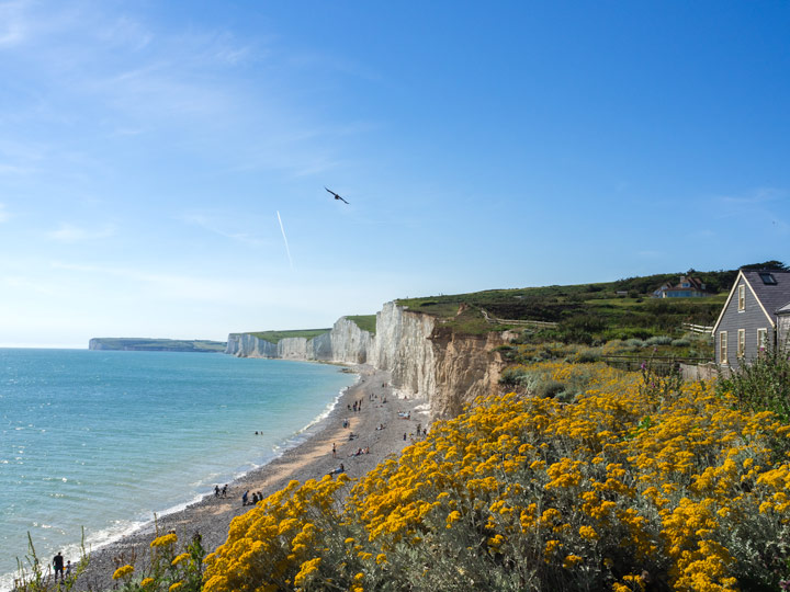 View of white Seven Sisters Cliffs and ocean with yellow flowers, a beautiful day trip from London by train