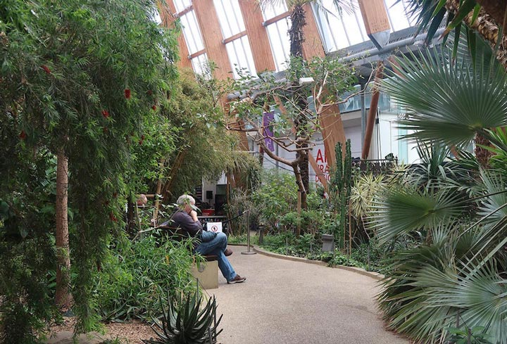Sheffield indoor garden with tropical plants