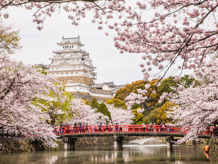 Japanese castle with red bridge and cherry blossoms, a famous Japan tourist attraction