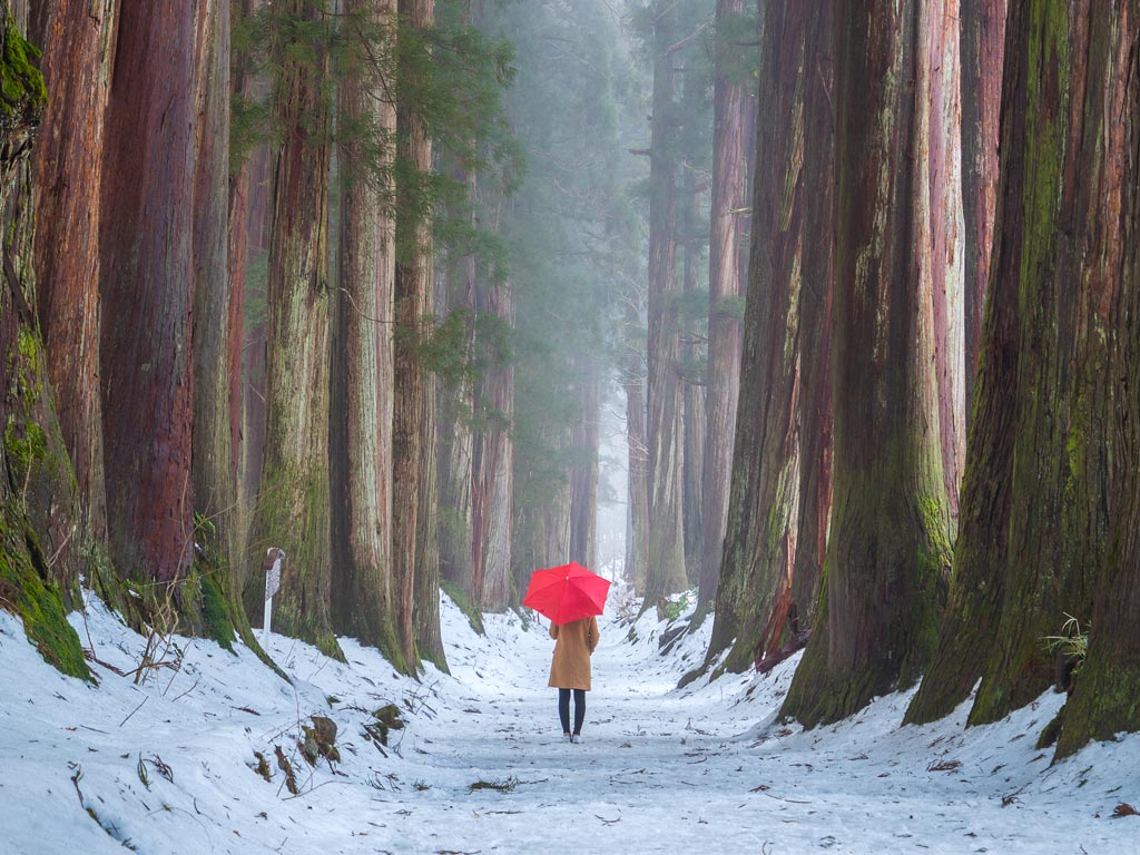 Woman with red umbrella walking through forest in Japan off the beaten path