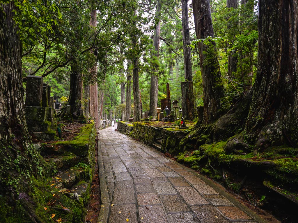 Brick path leading through mossy rocks and tall trees in Mt. Koya