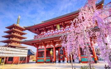 Tokyo's Asakusa Shrine during cherry blossom season should be on everyone's Japan travel checklist