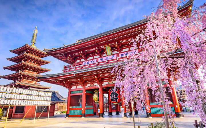Tokyo's Asakusa Shrine during cherry blossom season should be on everyone's Japan travel checklist