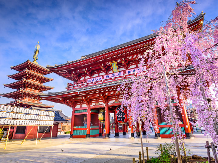 Tokyo Asakusa Shrine during cherry blossom season should be on everyone's Japan travel checklist