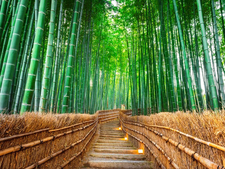 Arashiyama Bamboo Forest with empty walking path lined with straw