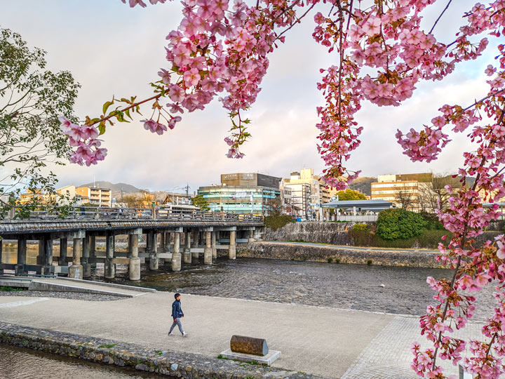 Pink cherry blossoms near river and bridge spotted during Kyoto 2 day itinerary