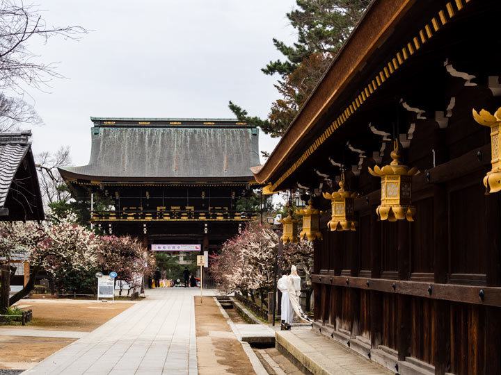 Kitano Tenmangu shrine with gold lanterns and path leading to main wooden gate
