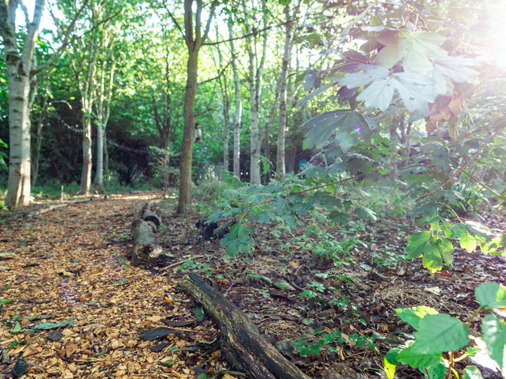 Forest trail next to Kenton Hall Estate glamping yurt