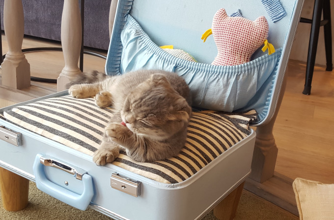 This cat is ready to move abroad in style