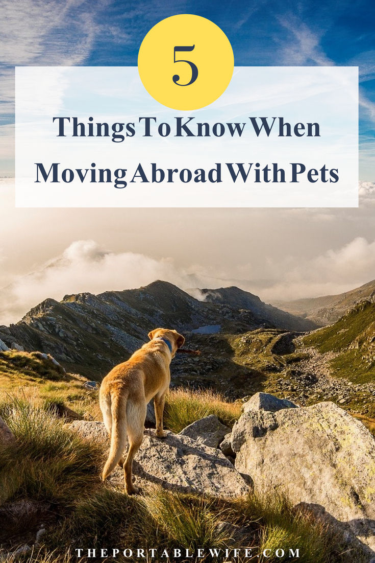 5 Things to Know When Moving Abroad With Pets