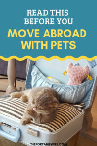 Read This Before You Move Abroad With Pets