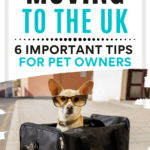 """Small dog wearing sunglasses sitting inside black pet carrier, with text overlay - """"Moving to the UK: 6 important tips for pet owners""""."""