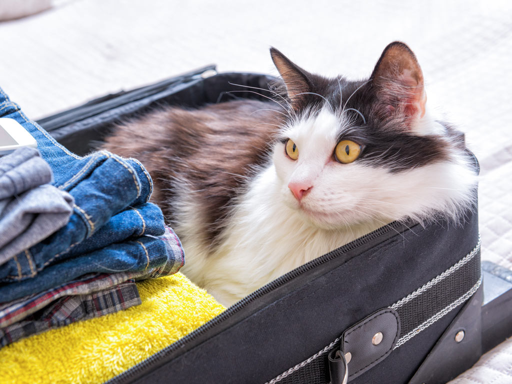 Long-haired cat sitting inside packed suitcase.