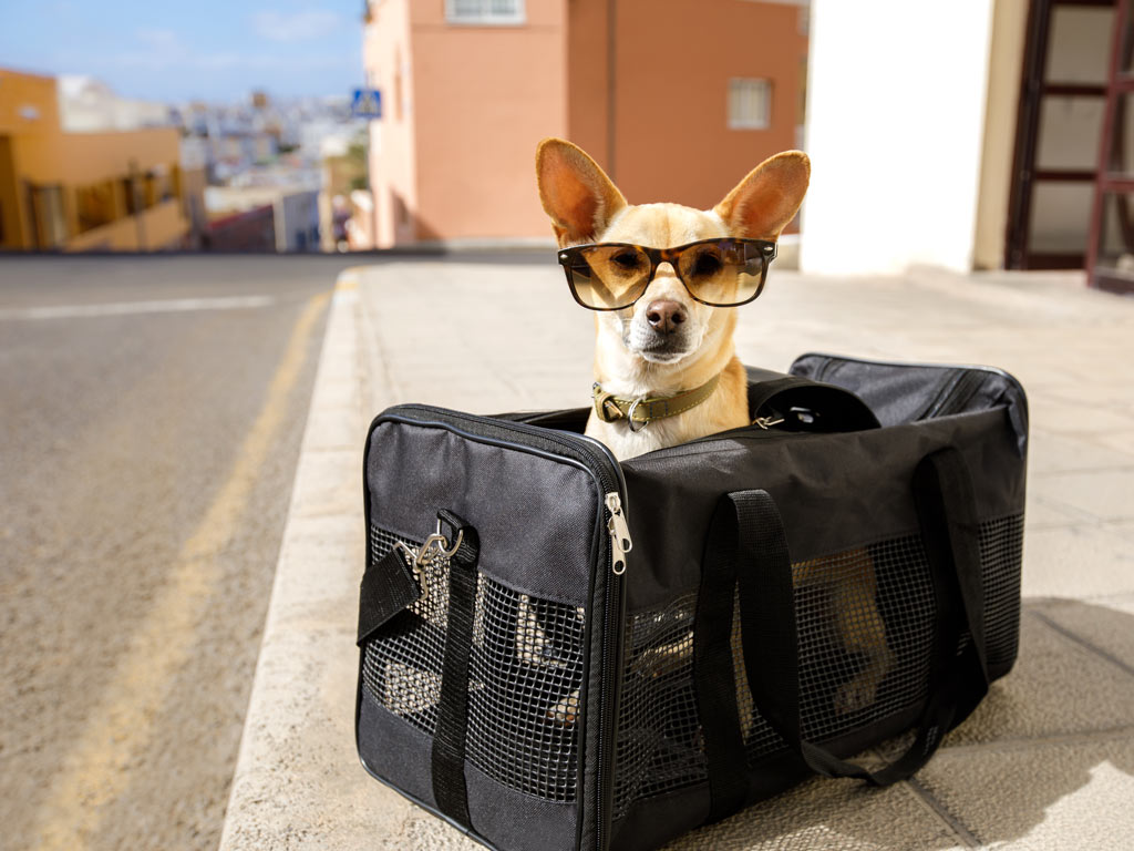 Small dog wearing sunglasses sitting inside black pet carrier for moving to the UK with pets.