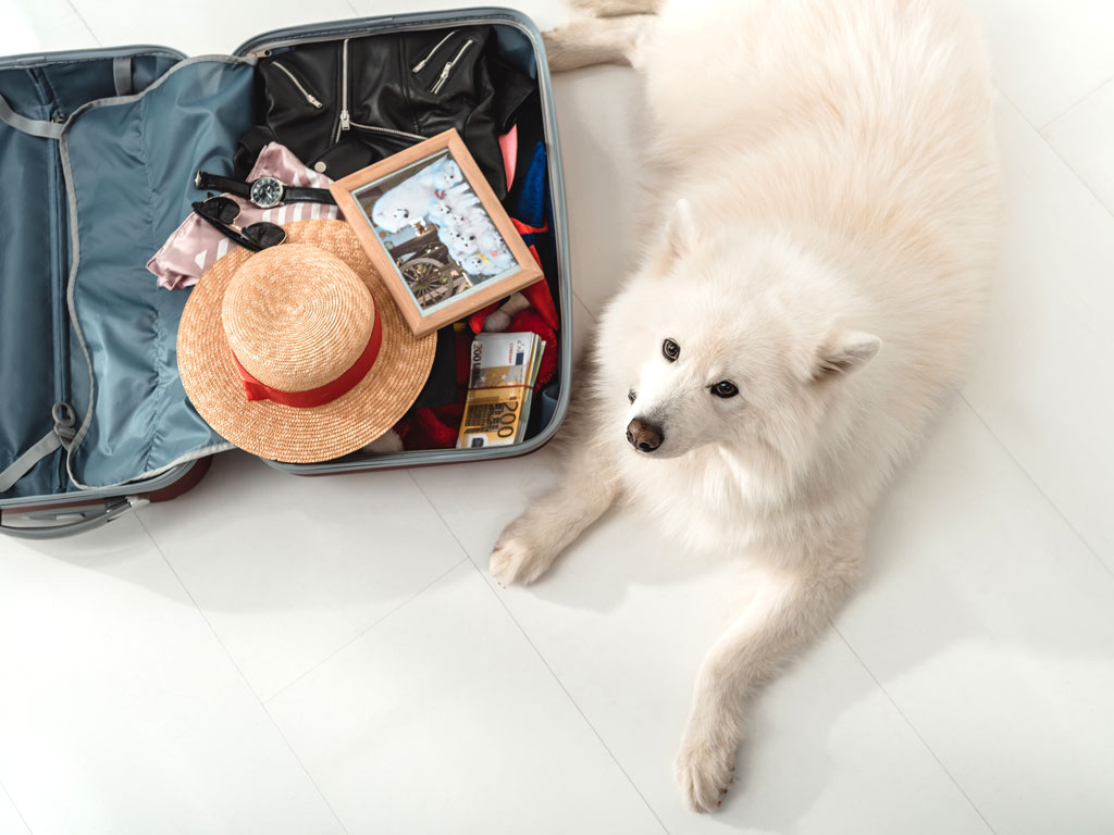 Fluffly white dog laying next to packed suitcase of person moving to the UK with pets.