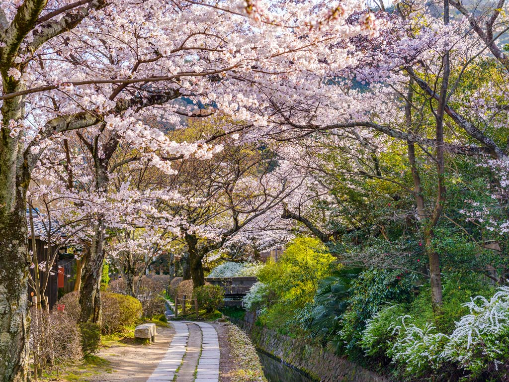 Kyoto Philosopher's Path surrounded by cherry blossoms, a must see during an Osaka Kyoto Nara itinerary