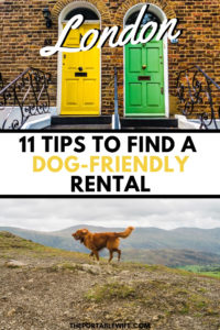 11 Tips for Renting in London With a Dog