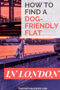 How to Find a Dog-Friendly Flat in London