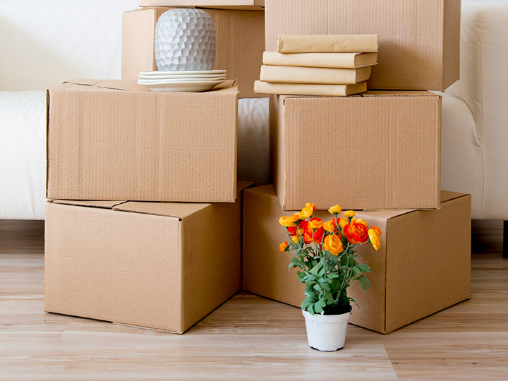 Stacked moving boxes with vase, plant, and books for settling into a new country