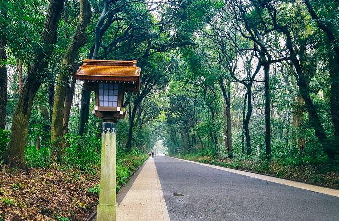 Yoyogi Park path in Shibuya Tokyo itinerary