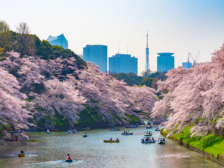 Small boats rowing down river lined with cherry blossom trees in Tokyo
