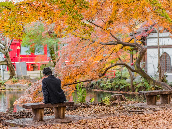 Man sitting on bench under yellow autumn leaves in Kichijoji park