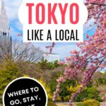 How to See Tokyo Like a Local - cherry blossoms and pond in Shinjuku