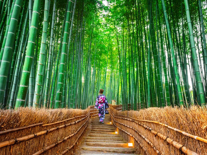 Traveling Alone Japanese