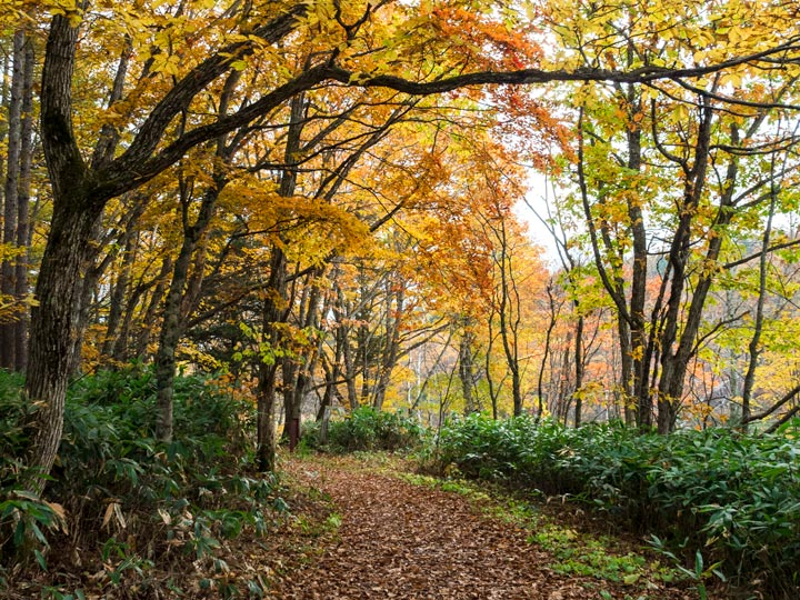 Autumn forest trail with fallen leaves in Japan