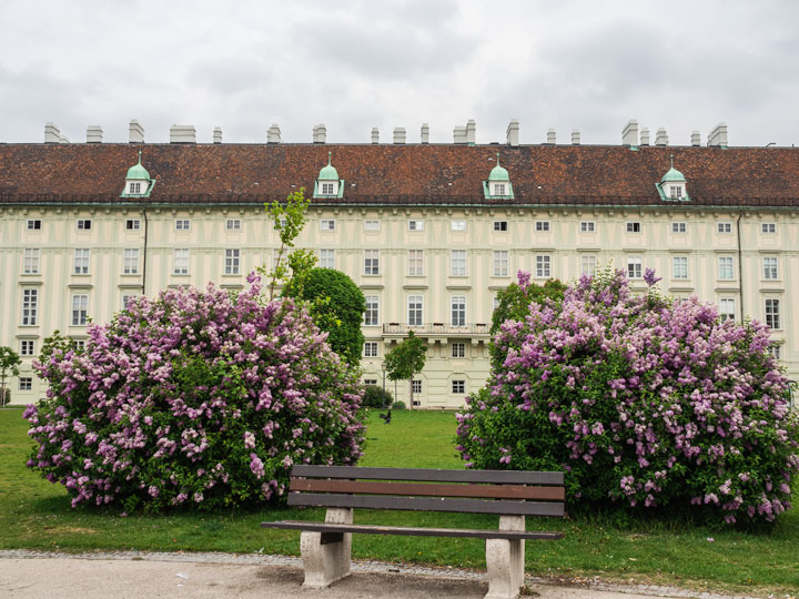 Bench with purple flowers in front of MuseumsQuartier Vienna