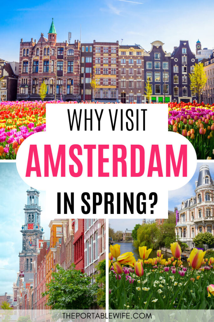 Why Visit Amsterdam in Spring - collage of city buildings with tulips in front