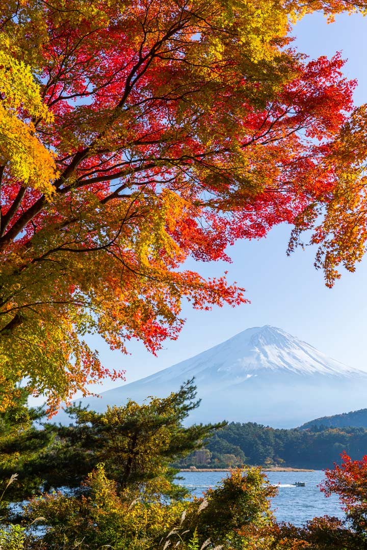 View of Mount Fuji and lake framed by red and gold leaves