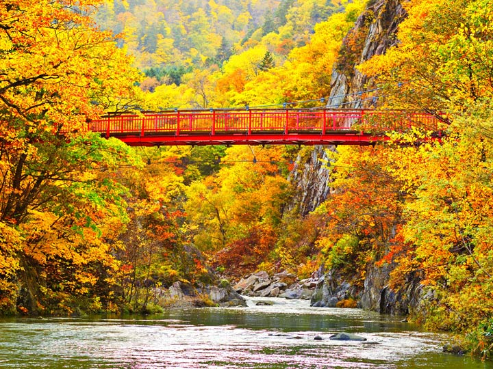 Famous Hokkaido red bridge over river with golden autumn leaves in Japan