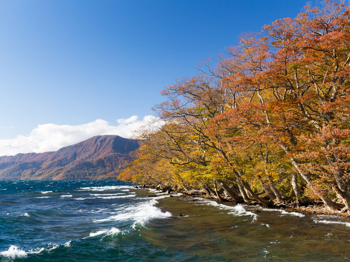 Lake Towada shoreline with view of fall trees and mountain