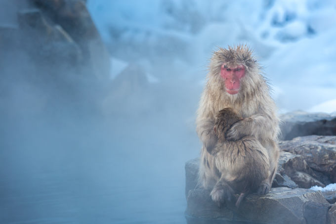 Nagano snow monkeys at Jigokudani
